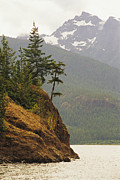 Fir Trees Photos - Fir Trees Cling To A Waterside Cliff by Raymond Gehman