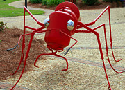 Danny Jones - Fire Ant Art