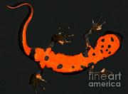 Fire Belly Newt Print by Dante Fenolio