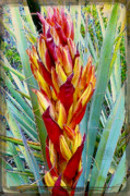 Dan Turner Prints - Fire Dance of the Blue Agave Print by Dan Turner
