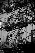 East Village Framed Prints - Fire Escape Tree Framed Print by Darren Martin