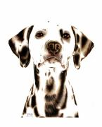 Pet Portraits Drawings Prints - Fire Fighters Best Friend Print by Sheryl Unwin