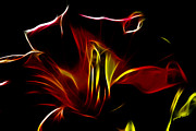 Tiger Fractal Photos - Fire Lily by Cheryl Young