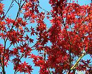 Red Leaves Photos - Fire Tree II by Jai Johnson