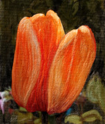 Nature Photos Mixed Media Posters - Fire Tulip Poster by Svetlana Sewell