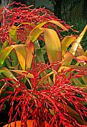 Stephen Mack Metal Prints - Firecracker Bromeliad Metal Print by Stephen Mack