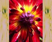 Firecracker Dahlia... Print by Rene Crystal