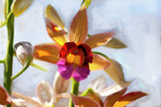 Italian Wine Paintings - Firefox  Orchid Painting by Don  Wright