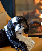 Dog Sitting Prints - Fireside Print by Fraida Gutovich