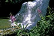 Creeks Photo Posters - Fireweed And Ouzel Falls, Near Big Sky Poster by Gordon Wiltsie