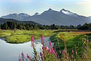 Mountain Range Art - Fireweed Near River. by Dagny Willis