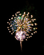 Sky Fire Prints - Fireworks in the Night Sky 5 Print by Steven Love
