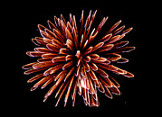 Pyrotechnics Framed Prints - Fireworks Framed Print by Magrath Photography