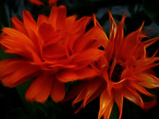 Fractal Art Photo Acrylic Prints - Firey Red Orange Flowers Abstract Acrylic Print by Cindy Wright