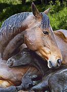 Equine Posters - First Born Poster by Diane C Nicholson