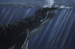 Humpback Whale Drawings - First Breath by Heather Ward