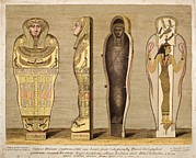 Egyptian Mummy Prints - First British Museum Mummy And Coffin Print by Paul D Stewart