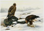 Eagle Paintings - First catch by Dag Peterson