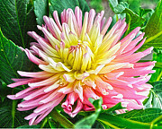 Diane Berry Paintings - First Dahlia by Diane E Berry