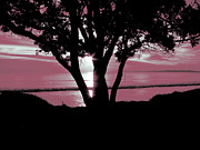 Awaken Prints - First Light - Pink Print by Karen Lewis