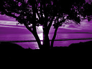 Awaken Prints - First Light - Purple Print by Karen Lewis