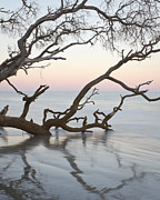 Beaufort Art - First light - Hunting Island South Carolina by Bill Swindaman