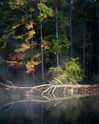Big Cypress Bayou Photos - First Llight by Lana Trussell