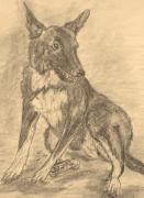 Mutt Drawings - First Mutt by Caroline Owen-Doar