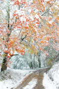 Snow Covered Trees Posters - First Snow Country Road Poster by Thomas R Fletcher