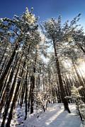Saija  Lehtonen - First Snow