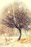 Christmas Time Prints - First Snow. Snow Flakes Print by Jenny Rainbow