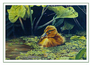 Cute Posters - First Spring - Mallard Duckling Poster by Bob Nolin