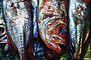 Philippines Art Prints - Fish Eyes 3 Print by Skip Nall