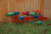 Canoe Sculpture Metal Prints - Fish From Cars Metal Print by Ben Dye