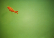 Solitude Photos - Fish In Green by Lynn Koenig