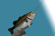Bass Digital Art - Fish Mount Set 13 A by Thomas Woolworth