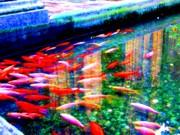 Animals Prints - Fish Pond Print by Roberto Alamino