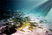 Rays Of Light Digital Art Originals - Fish swim in the light by Sven Brogren