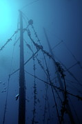 Sunken Boat Prints - Fish swimming around the mast of the Le Voilier shipwreck underwater Print by Sami Sarkis
