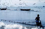 Flocks Of Birds Posters - Fisherman Collecting Nets On Beach Poster by Axiom Photographic