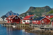 Norwegian Fishing Village Framed Prints - Fishermens houses Framed Print by Heiko Koehrer-Wagner