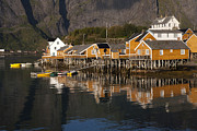 Norwegian Fishing Village Framed Prints - Fishermens Village Sakrisoy  Framed Print by Heiko Koehrer-Wagner