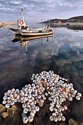 Basket Pot Prints - Fishing - 7 Print by Okan YILMAZ