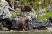 Tim Grams - Fishing Bears