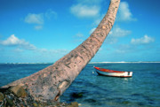 Puerto Rico Framed Prints - Fishing boat and Palm trunk Framed Print by Thomas R Fletcher
