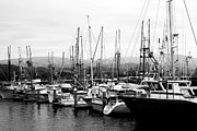 Black And White Photography Acrylic Prints - Fishing Boats . 7D8208 Acrylic Print by Wingsdomain Art and Photography