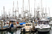 Sail Boats Prints - Fishing Boats in Pillar Point Harbor at Half Moon Bay California . 7D8184 Print by Wingsdomain Art and Photography