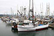 Mavericks Posters - Fishing Boats in Pillar Point Harbor at Half Moon Bay California . 7D8199 Poster by Wingsdomain Art and Photography
