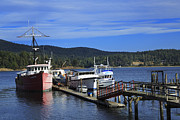 Docked Boats Framed Prints - Fishing boats in Sooke Framed Print by Louise Heusinkveld