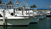 Charters Photos - Fishing Charters by Tammy Link